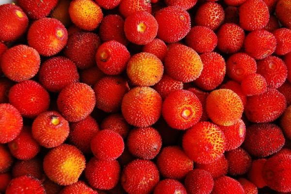 corbezzolo_fruit