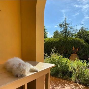 cat relax agriturismo